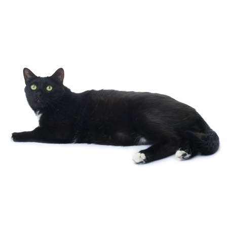 metis: Lying on the floor black cat isolated over the white background