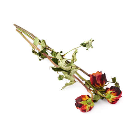 Three dried red roses over the white isolated background