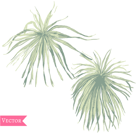 Abstract watercolor vector palm leaves Tropical plants isolated on white, Hand drawn exotic swimwear elements.