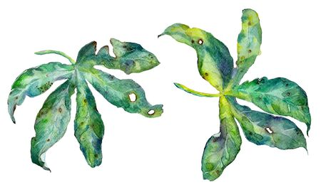 Abstract watercolor exotic passiflora leaves isolated on white. Can be used for web pages, identity style, printing, invitations, banners, cards, leaflets.
