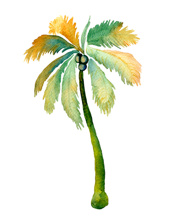 Palm geïsoleerd. Aquarel kokosnoot boom illustratie geïsoleerd op wit. Handgeschilderde bladeren en trunck. Exotisch hawaiiaans swimwear element van de wildernis. Aquarel palmtekening. Zomerprint.