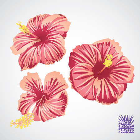 Hibiscus flower in pink red and yellow color. Vector silhouette of exotic plant. Botanical element isolated on white background. Summer Hawaiian hand drawn vector tropical hibiscus.