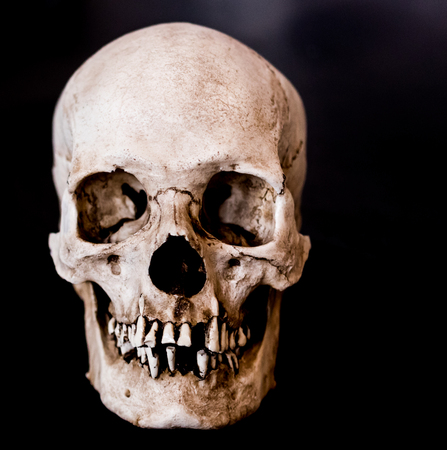 Fiberglass human skull facing straight on with a black background