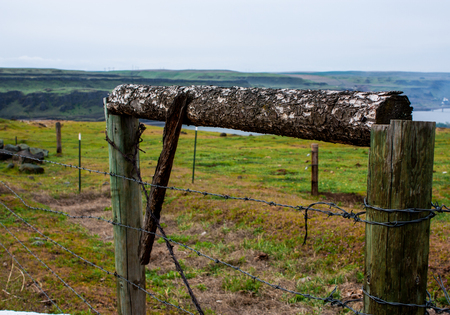 Old wood tree branch gate on a farm with green grass and horizon