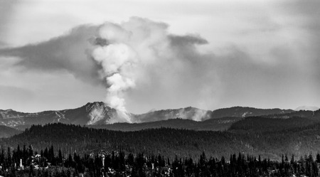 Black and white raging forest fire pillar of smoke in to the clouds Stock Photo