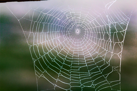 Tattered dew soaked worn out spider web falling apart Stock Photo