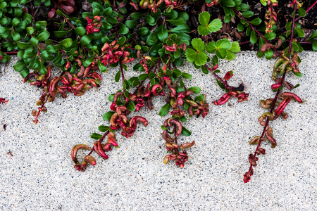 Plant growing over a concrete sidewalk in daylight Stock Photo