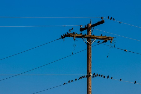 Crows on a power line pole with a blue sky