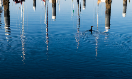 Boat mast reflections on blue rippled water with a water bird