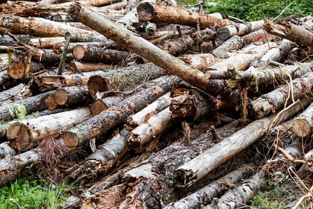 Pile of aged weathered worn old logs stacked irregularly
