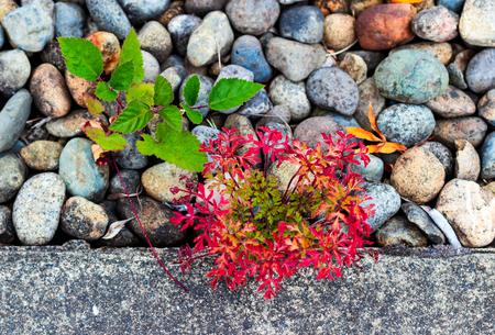 Random weeds and plants growing through gravel on a sidewalk