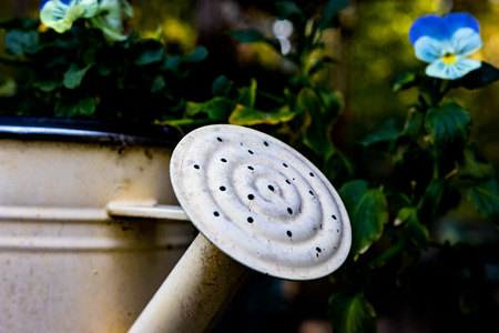 Old rusty watering can used as a flower pot filled with plants