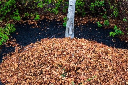 Raked leaves in a pile under a tree with plants