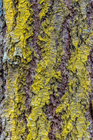 Old worn tree bark moss growing close up