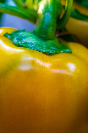 Abstract close up yellow bell pepper and stem in daylight