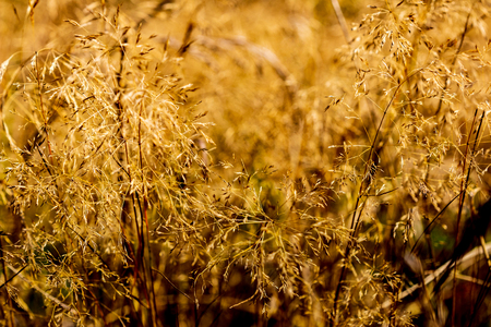 Abstract blurry dry summer field grass on a hot sunny day Stock Photo