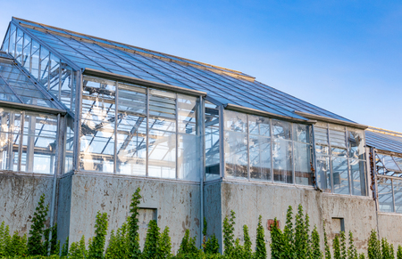 Greenhouse with climbing vines and a blue sky