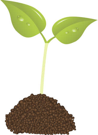 immature: young plant new life concept vector