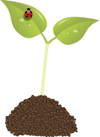 young plant new life concept vector with ladybird Stock Vector - 6095977