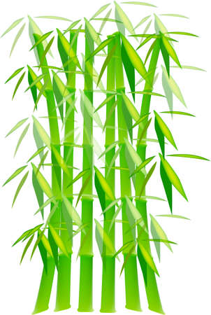 fengshui: Green Bamboo Plants