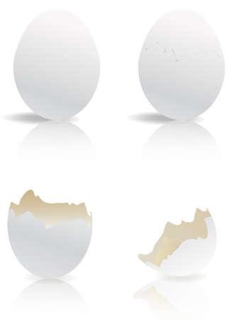 origen animal: huevos blancos y cáscaras de huevo roto aislados  Vectores