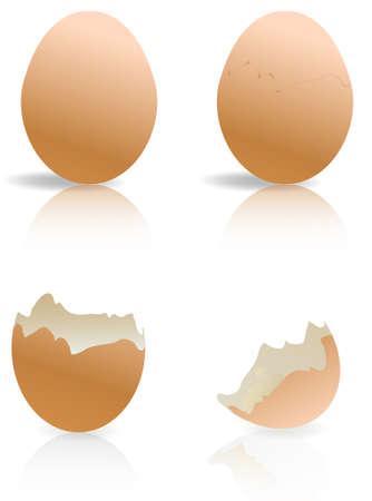 broken egg: brown and broken egg shells isolated