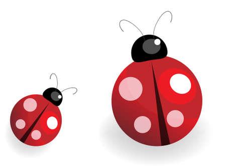 lady bug: Beispiel f�r ein Marienk�fer over white background