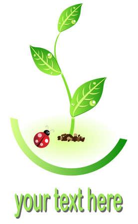 lady bug: �ko-Abbildung-Symbol mit Pflanzen und Lady Bug f�r Umweltkonzepts