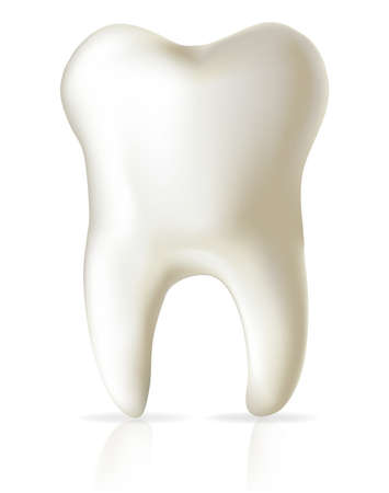 whiten: illustration of white tooth isolated over white with a reflection