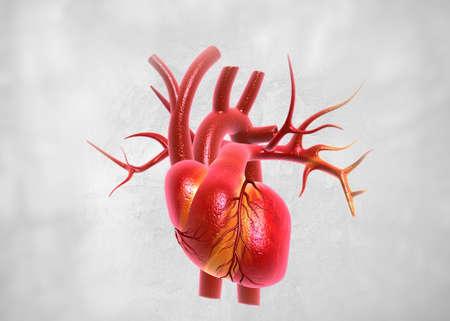 Human heart anatomy. 3d render