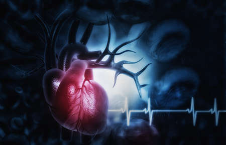 3d illustration of Abstract medical background with Human heart anatomy 写真素材