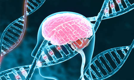 Human brain with dna. 3d illustration Stock Photo