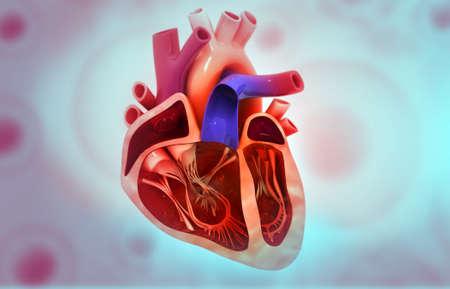 Human heart anatomy on medical background. 3d illustration