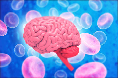Human brain anatomy with science background. 3d illustration