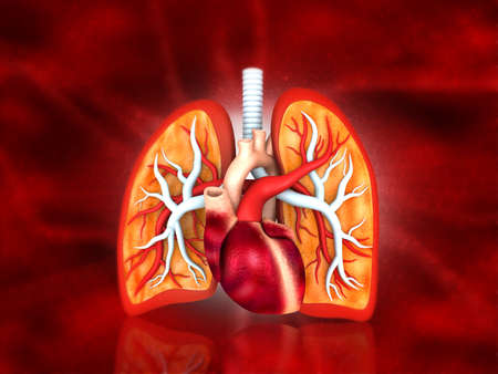 Anatomy of human respiratory system. Medical science background. 3d illustration