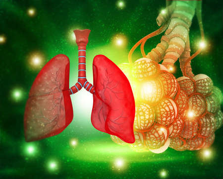 Human lungs anatomy on medical science background. 3d illustration