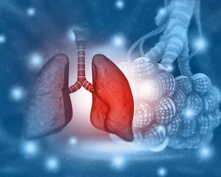 Human lungs anatomy on medical science background. 3d illustration Reklamní fotografie - 131808984