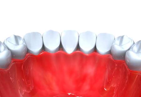 Tooth anatomy. 3d render