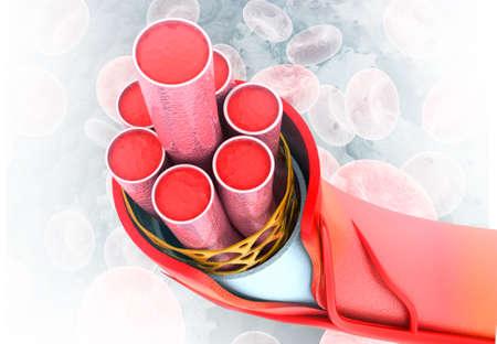Blood vessels anatomy on medical background. 3d render
