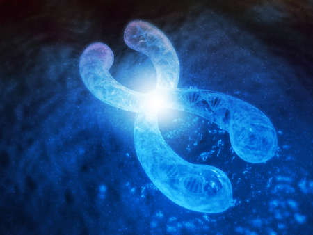 Chromosomes with DNA, X chromosomes,  Genetics concept. 3d render