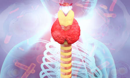 Abstract medical background with Human Body thyroid gland anatomy. 3d illustration
