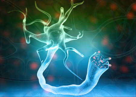 Neurons and nervous system on science background. 3d illustration
