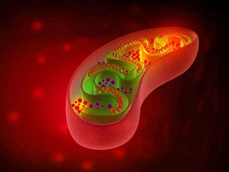 Cell mitochondria anatomy. 3d illustration