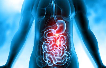 Human body digestive system anatomy on scientific background. 3d illustration