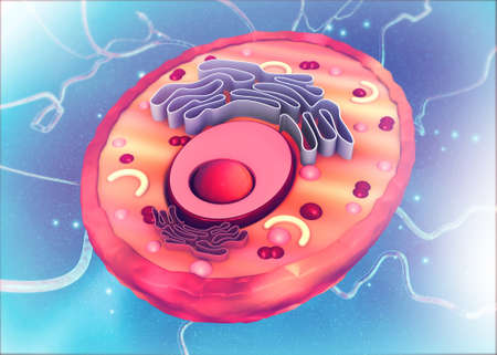 Cell anatomy on scientific background. 3d illustration