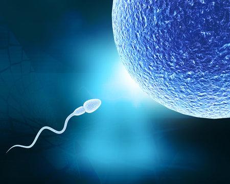 Human sperm and egg. 3d illustration