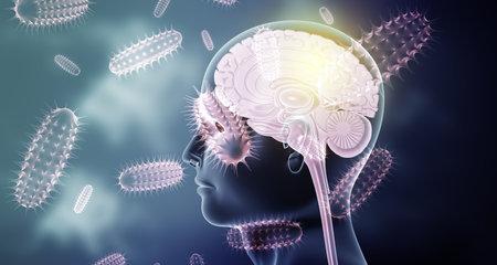 Human brain anatomy on virus background. 3d illustration Standard-Bild