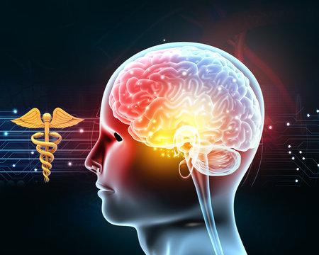 Human head anatomyanatomy on medical background. 3d illustration Standard-Bild
