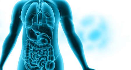 Human body anatomy blue.3d illustration