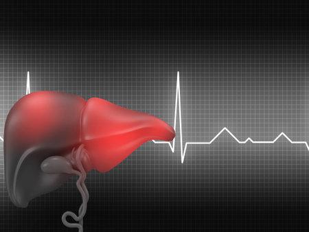 Human liver on medical background. 3d illustration